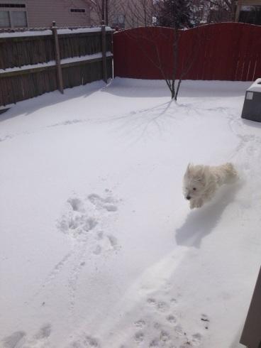 Helo enjoying the snow!